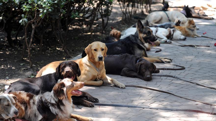 La adopción de animales de compañía se consolida como alternativa a la compra