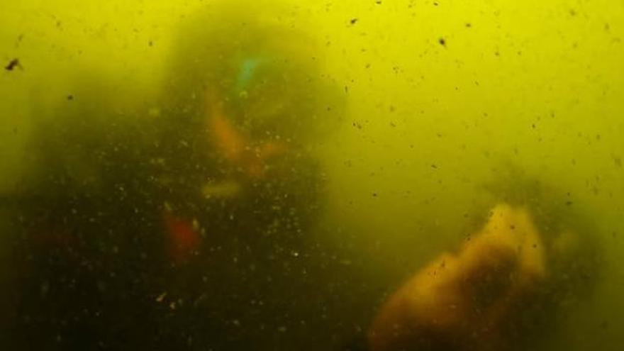 Imagen de un vídeo ANSE y WWF sobre el estado del Mar Menor