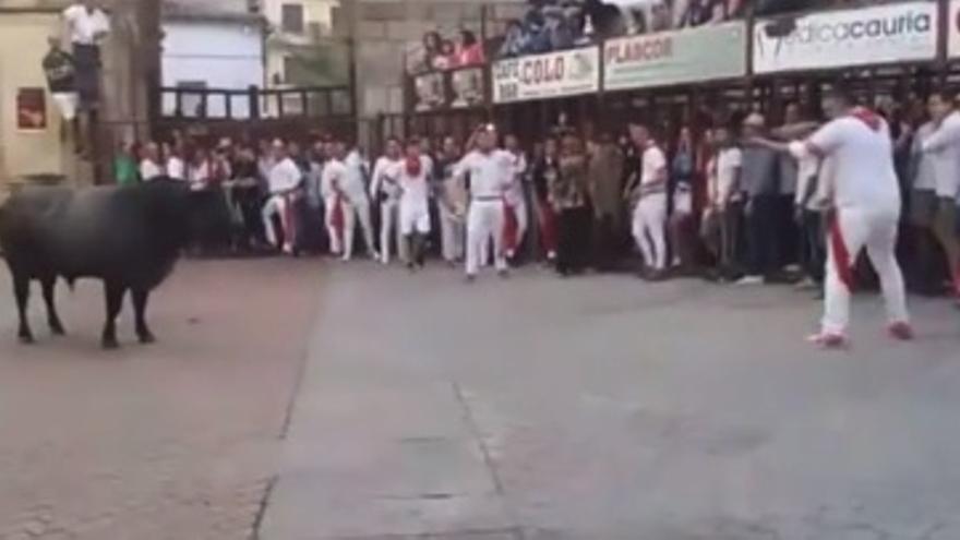 Momento de la muerte del animal, rodeado de público
