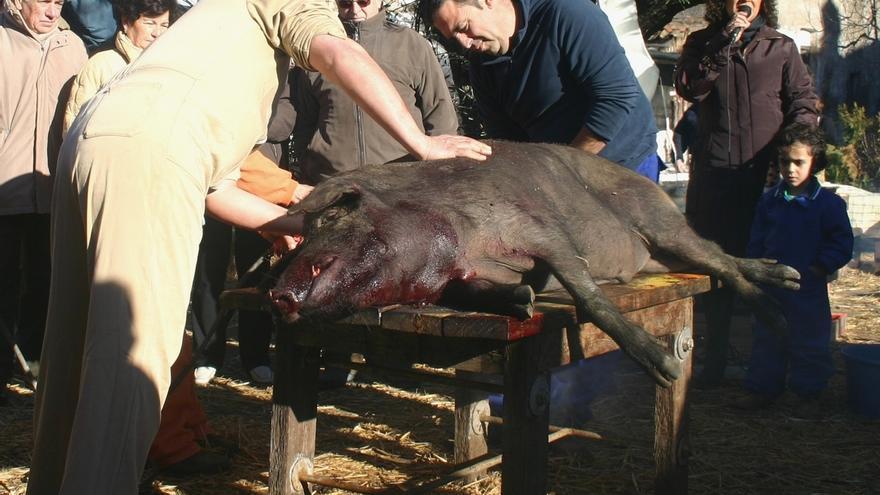 El Real de la Jara celebra este fin de semana la matanza del cerdo ibérico y el I Premio Dehesas
