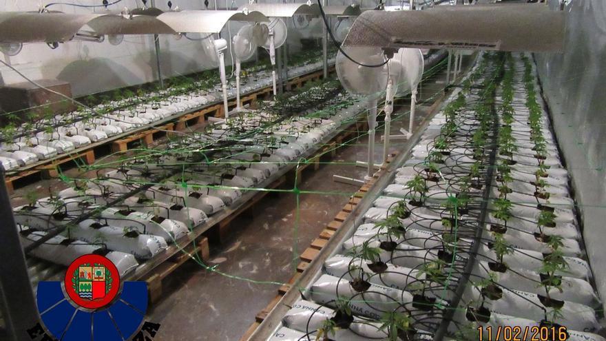Intervenidos 30 kilos de marihuana en Gipuzkoa vinculados a una supuesta asociación de usuarios de cannabis