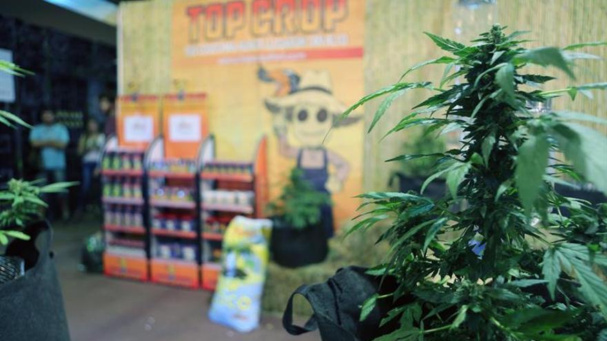 Uruguay venderá marihuana en farmacias durante las 24 horas del día