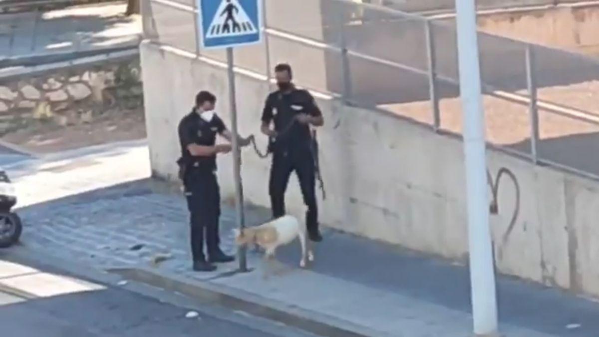 Los agentes custodiando la cabra.