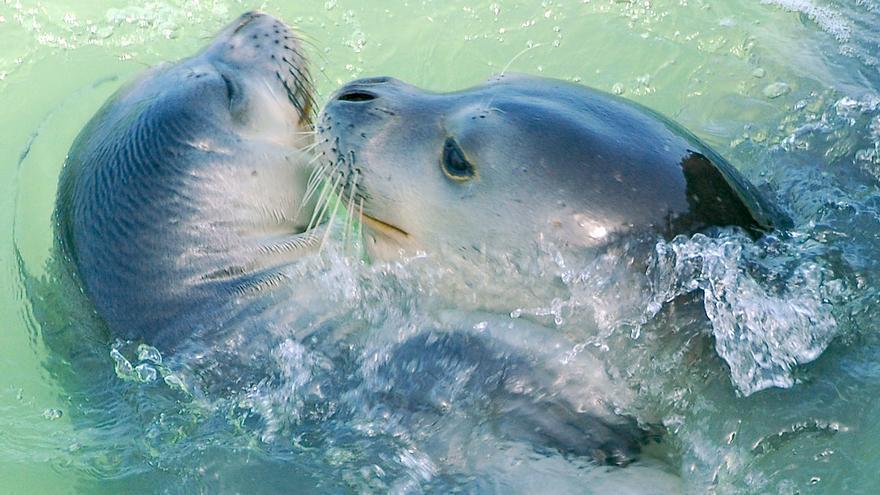 Madre y cría de foca. | M. A. Cedenilla