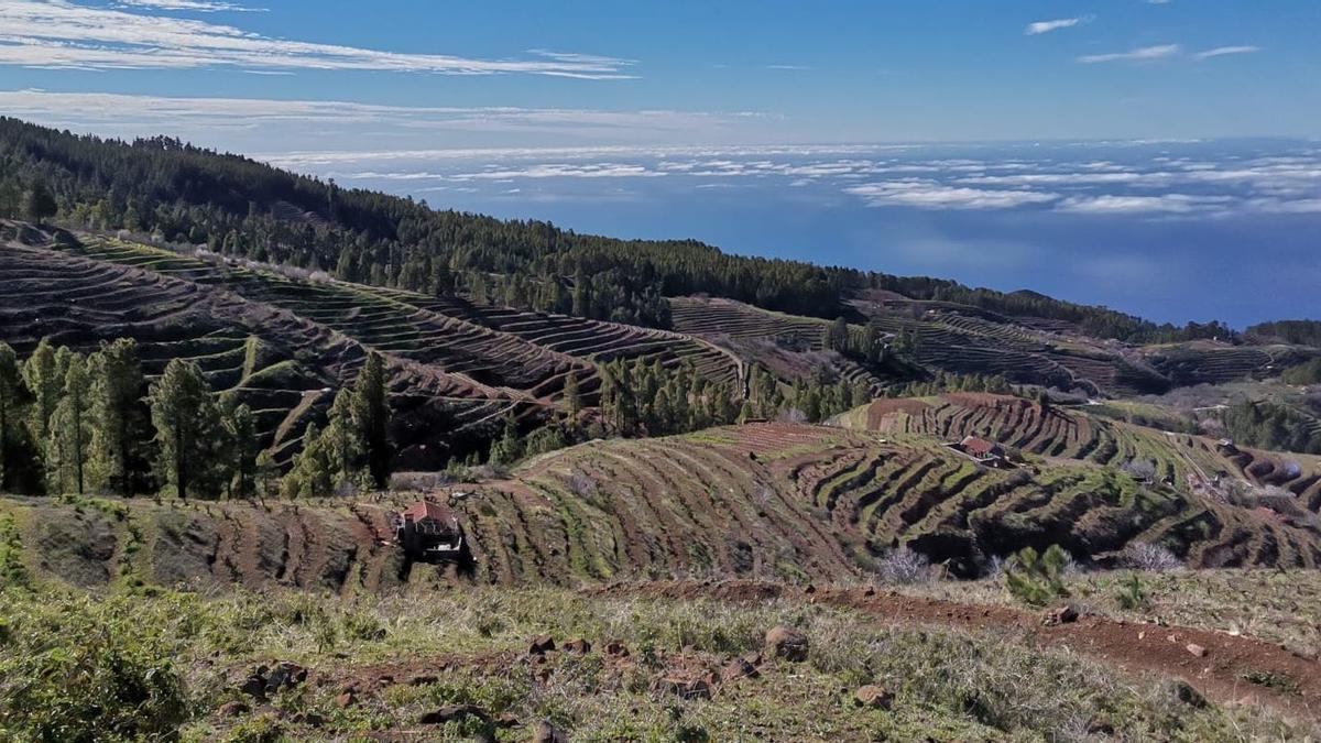 Viñedos del Norte de La Palma.
