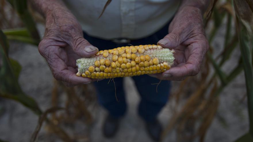 La seguridad alimentaria global no está amenazada, según el Foro de Reacción Rápida
