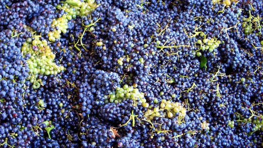 La próxima Ley de la Viña y el Vino permitirá la autorregulación del sector, crea una interprofesional y un comité de interlocución permanente