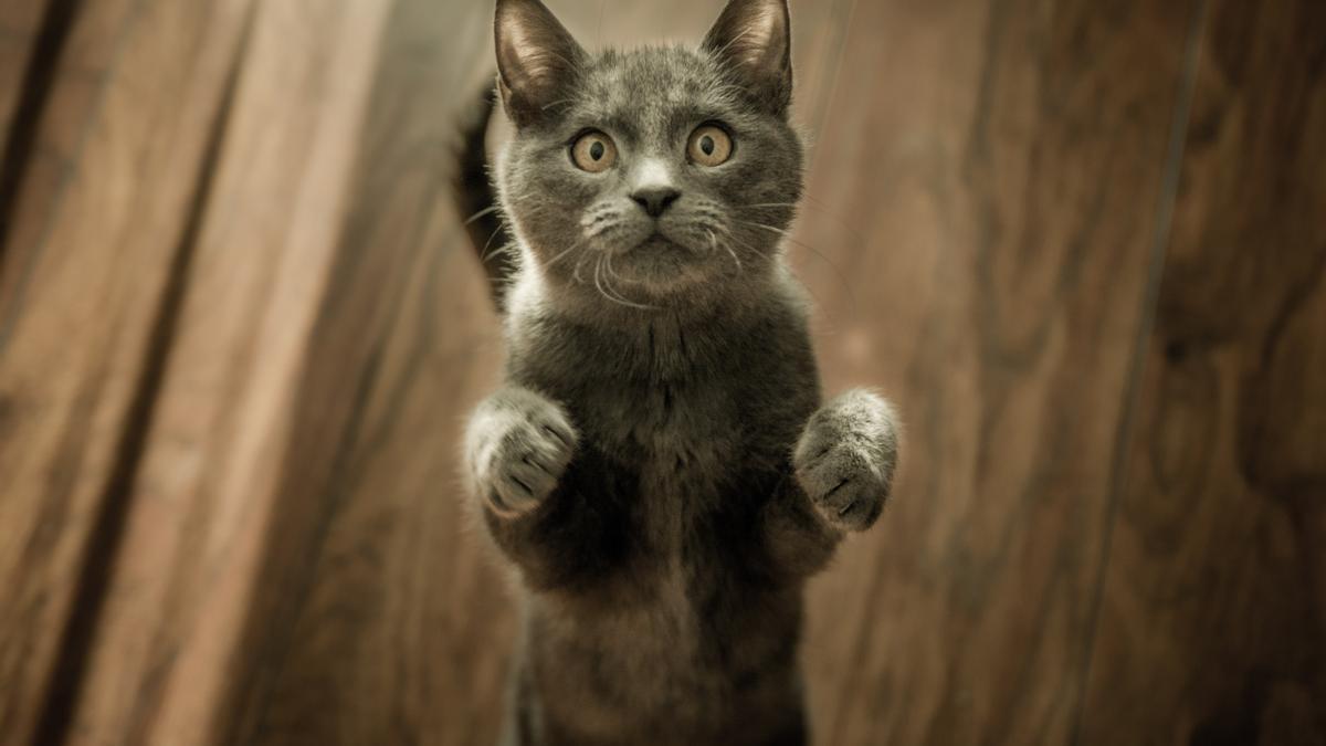 ¿Tu gato sabe su nombre? (¿o sencillamente te ignora cuando lo llamas?)