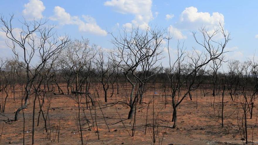 Seguidores de Evo Morales acusan a menonitas y brasileños por la deforestación
