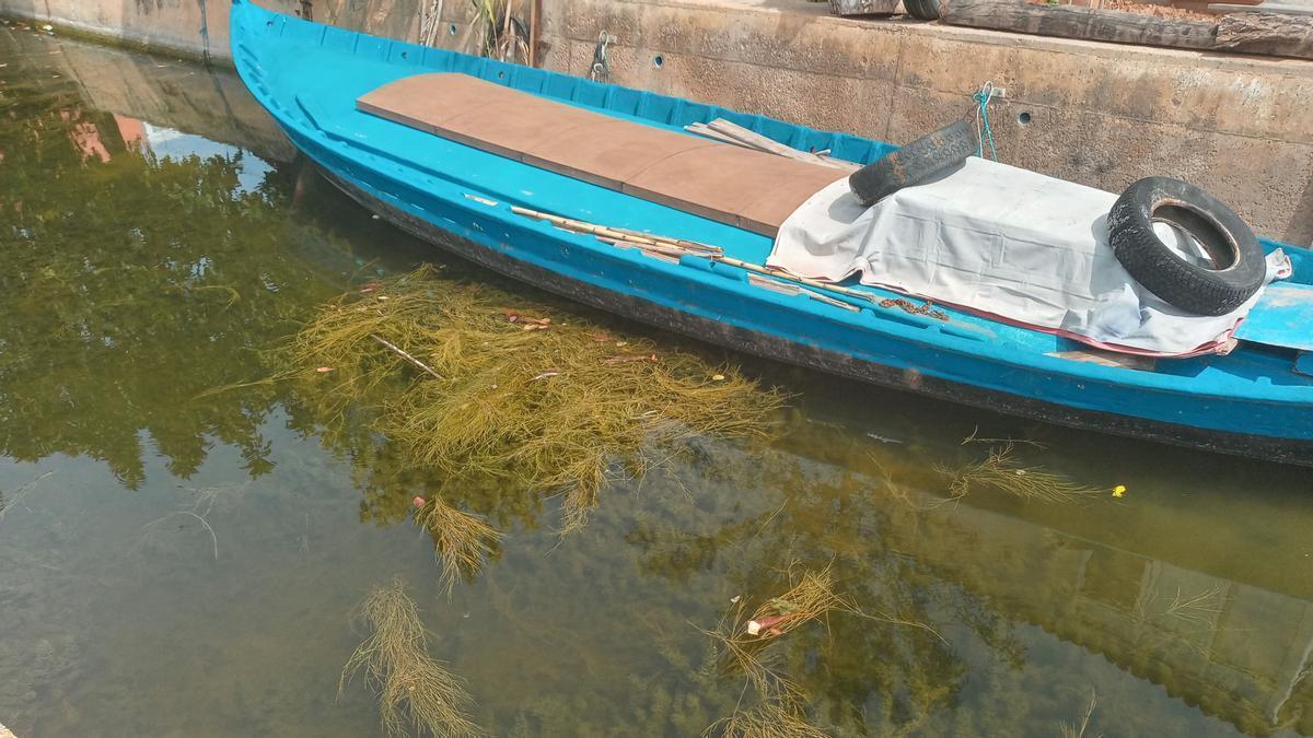 La vegetación subacuática en uno de los canales.