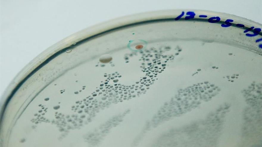 Lanzan una plan para acelerar el desarrollo de la vacuna contra el sida