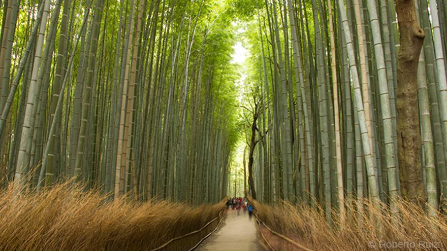 Arasiyama, bosque de bambú Kioto, Japón