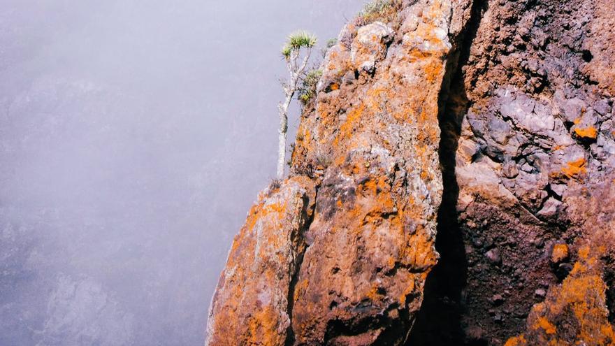 Imagen del drago en un risco inaccesible situado por encima de la Hacienda del Cura, las puertas de La Caldera de Taburiente.