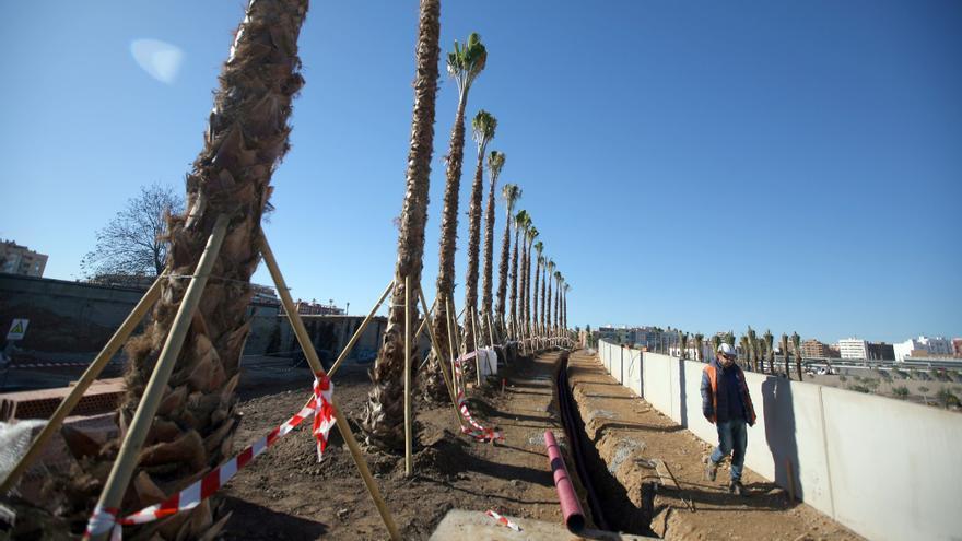 Varias de las palmeras plantadas en el Parque Central