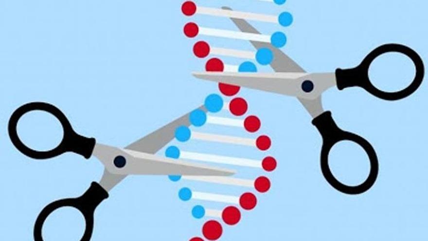 Investigadores usarán la edición genética para destruir el corazón del virus
