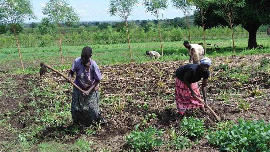 Mujeres trabajando en el campo en Uganda.