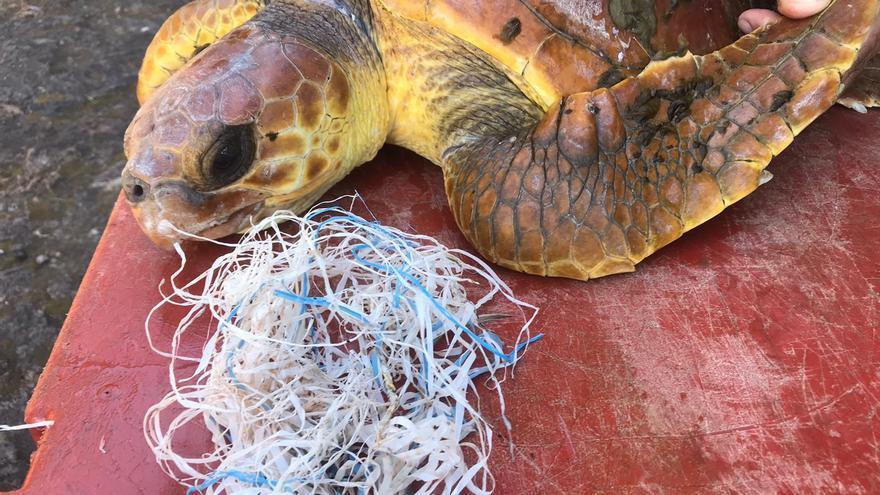 Tres tortugas rescatadas en aguas de El Hierro, atendidas en Gran Canaria