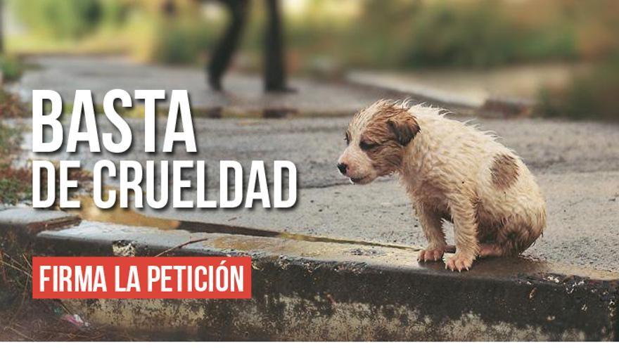 Una petición en Change.org de la Asociación Animalista Libera
