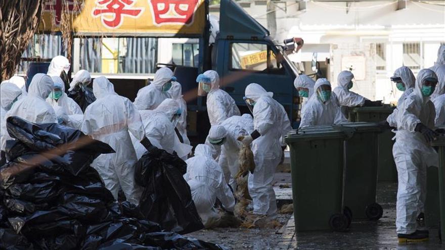 En estado muy grave una paciente contagiada con el nuevo virus aviar H5N6