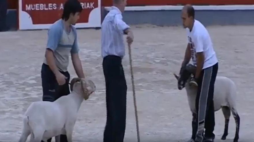 Los carneros, al inicio de la brutal pelea.