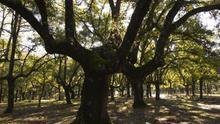 El PP rebaja la protección de los parques nacionales para que los terratenientes puedan cazar en ellos