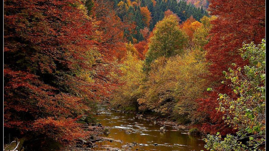 Árboles teñidos de otoño junto al cauce del Río Irati. rjime31 (CC)