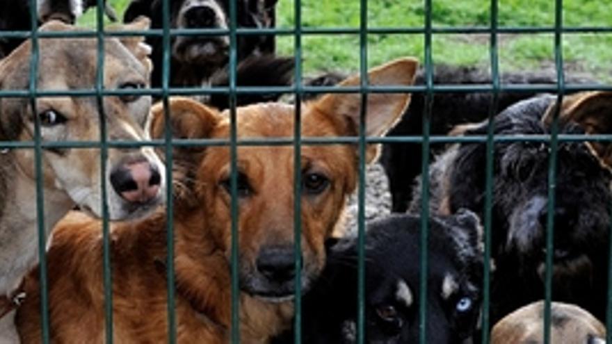 Adepac pide ''ayuda urgente'' para más de 400 perros