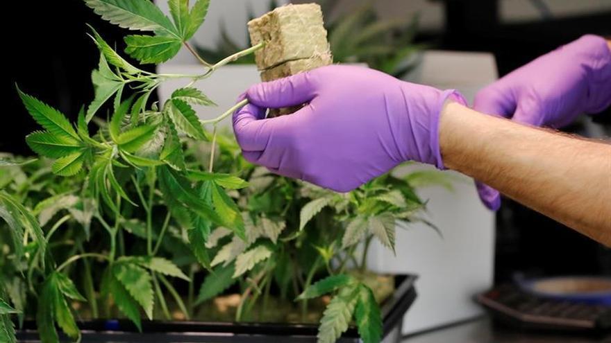El fabricante de la cerveza Corona apuesta 4.000 millones de dólares al futuro del cannabis