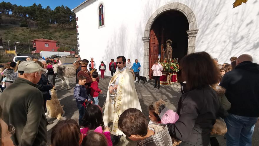 Bendición de los animales en Fuencaliente.