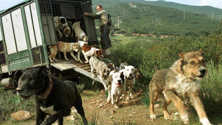 El PP rectifica y da vía libre a prohibir cortar el rabo a los perros