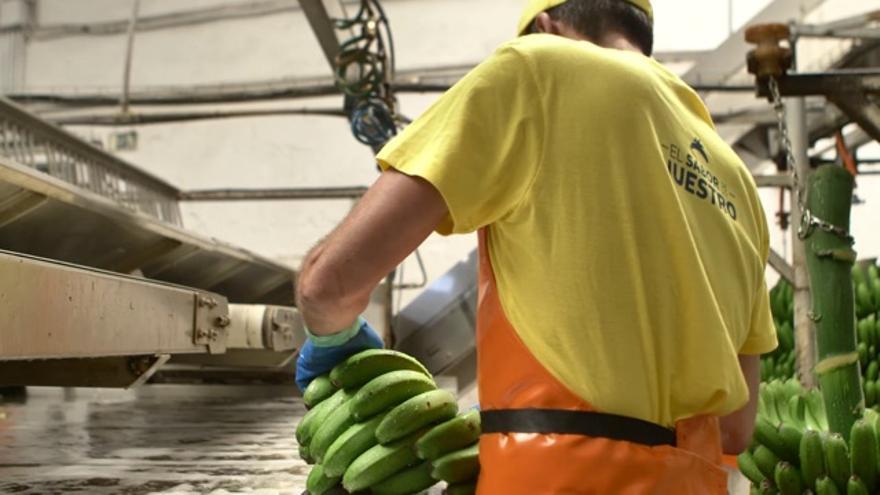 Empaquetado de plátano.