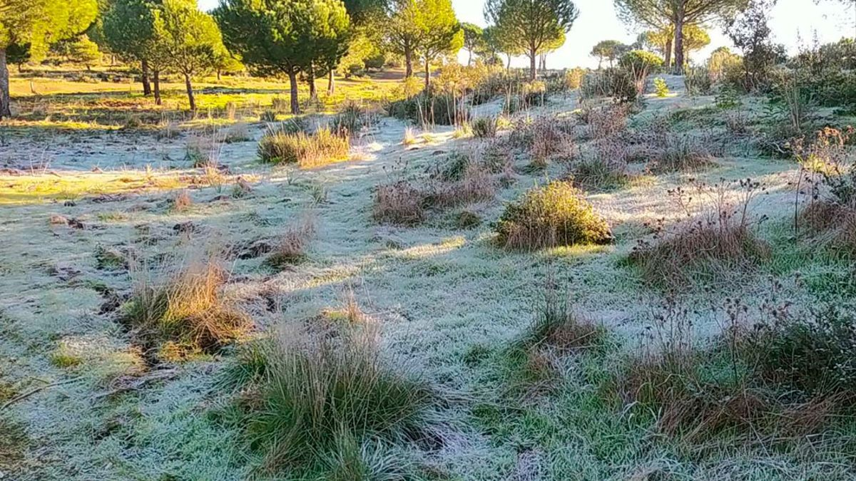 Helada en la Sierra de Córdoba