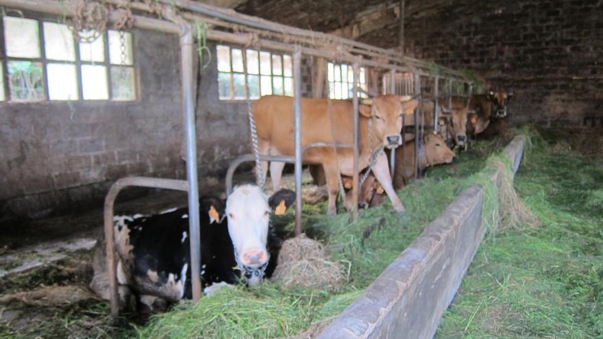 El PP pide al Gobierno que modifique las pruebas diagnósticas de la tuberculosis bovina