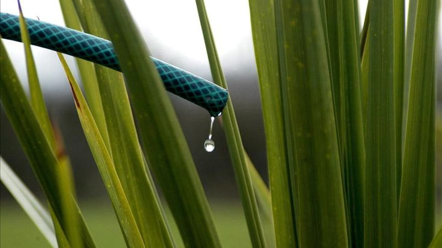 Plantas en verano, de los programadores wifi al barreño de agua