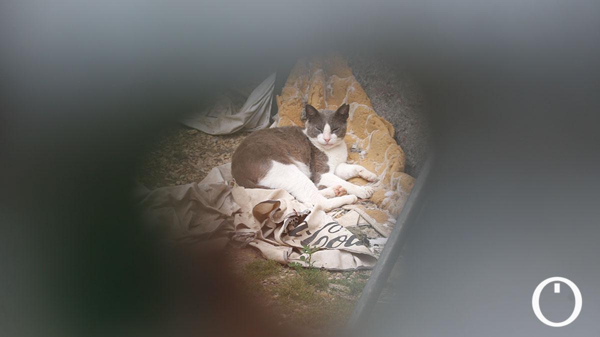 Gato de la colonia de la Ribera