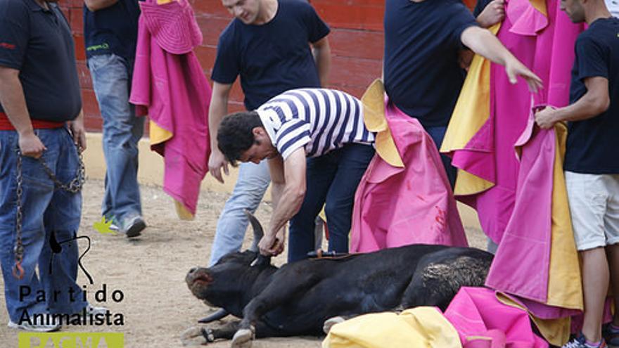 """Los """"mozos"""" cortan una oreja a un becerro aún vivo, el pasado domingo en El Escorial   Foto: Partido Animalista PACMA"""
