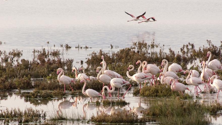 Andalucía asiste como destino protagonista de turismo ornitológico a una feria de aves en Inglaterra