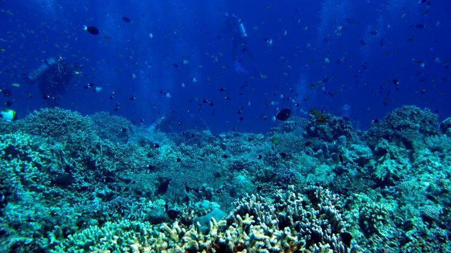 Los corales del caribe sobrevivieron a un antiguo cambio climático, según un estudio