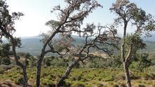 La sequía de 2019 corta la tregua que permitió a los bosques españoles frenar su deterioro continuo el año pasado