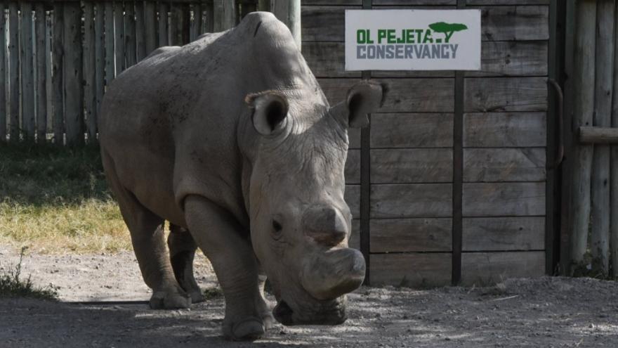 El último rinoceronte blanco del mundo
