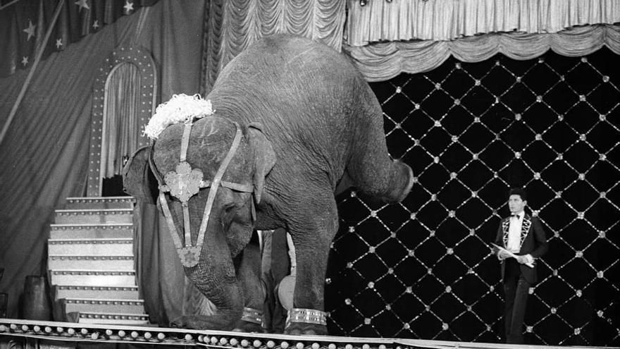 Mara nació hace 50 años en India, fue vendida a un circo en Argentina y, con solo dos años de edad, ya era explotada para los espectáculos