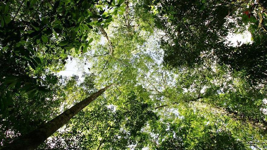 La deforestación del Bosque Atlántico brasileño creció un 57 % en el último año