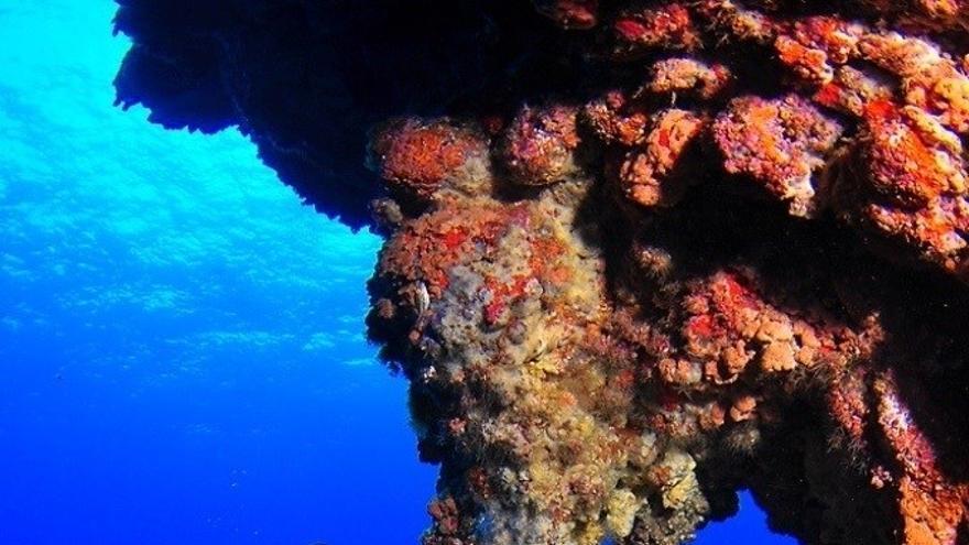 Fondos submarinos de la isla de El Hierro.