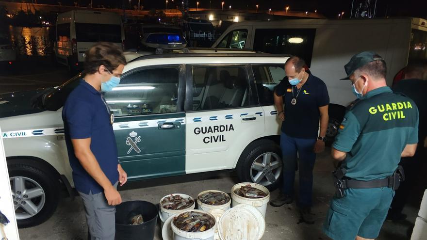 La Guardia Civil decomisa más de 120 kilos de pescado capturado de forma ilegal en la provincia tinerfeña