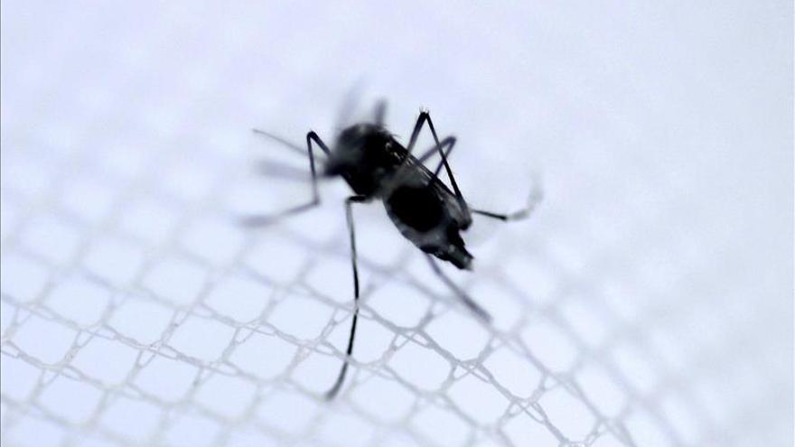 Cae el número de ciudades en Brasil en riesgo de epidemia de dengue y chikunguña
