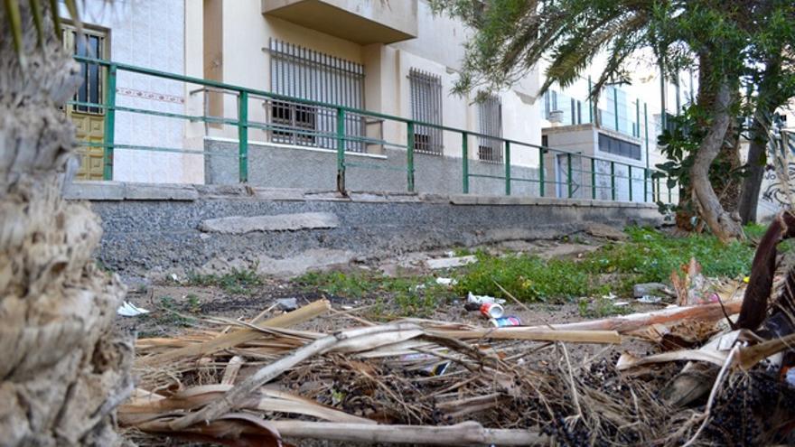 Las palmeras no las podan y sus hojas se caen solas. FOTO: Iago Otero Paz.