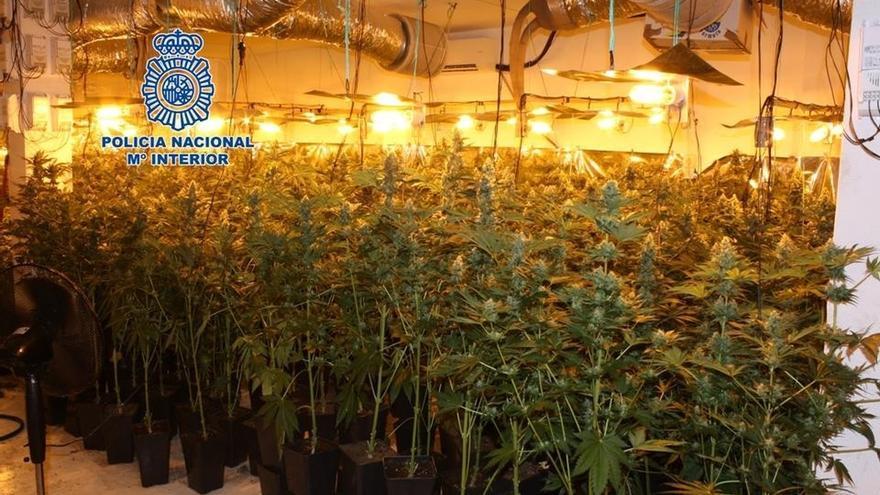 Desmantelan invernadero de 400 plantas de marihuana en Cúllar Vega y detienen a dos hombres