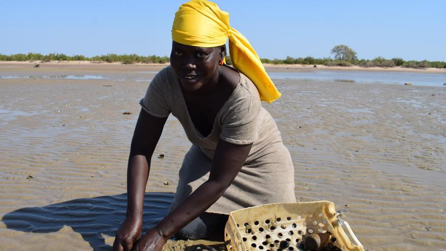 El marisqueo es para las mujeres del Delta de Saloum su principal sustento económico.