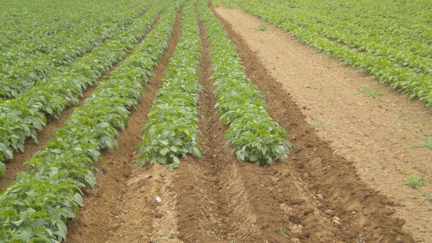 El cultivo de patata ecológica es una alternativa para diversificar la actividad ganadera de los valles pirenaicos