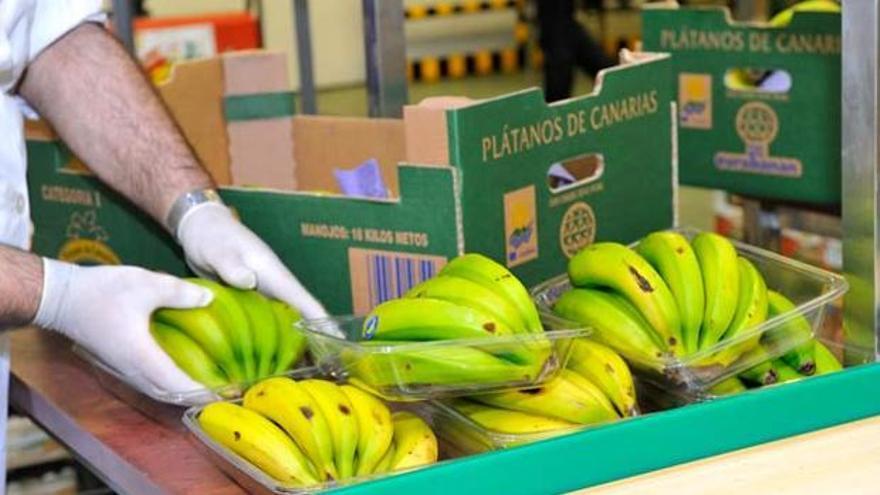 Envasado de plátano con origen en Canarias